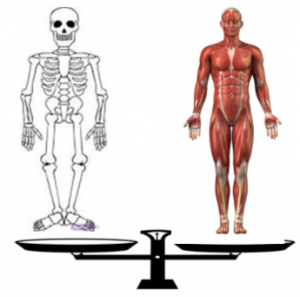 balanced muscles and bones image
